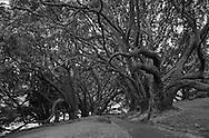 Albert Park, Auckland, New Zealand
