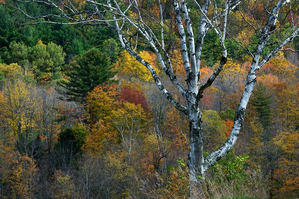 Fall colours near Lincoln, New Hampshire