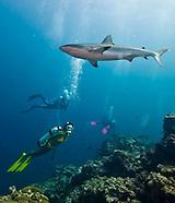 Yap Sharks 2010