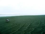 My dog Lilly running on Pacific Beach, Washington.