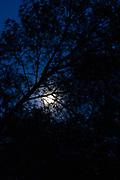 Mediterranean pine forest in Moonlight, Catalonia, Spain