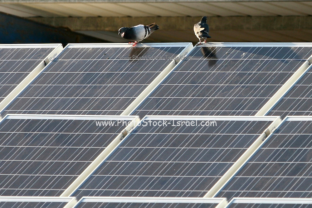 Israel, Kfar Vitkin, Solar panels on top of a cowshed in a dairy farm in Kfar Vitkin. The farm uses the electricity created from solar energy. Excess electricity is sold to the electric company for distribution