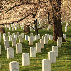 Washington, DC, USA - April 11, 2013: Flowering Tree in Springtime at Arlington National Cemetery in Virginia.