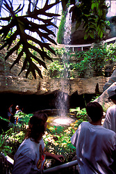 Stock photo of the interior of the Cockrell Butterfly Center at the Museum of Natural Science in Houston Texas