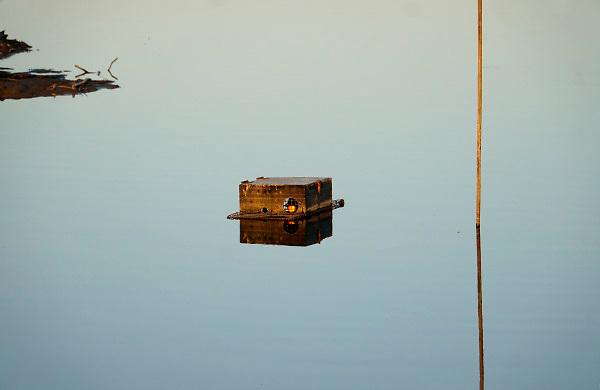 Nederland, Kekerdom, 16-11-2018In de Millingerwaard is een muskusrattenval geplaatst. Hij drijft op het water met een goudgele appel erin als lokvoer.qq