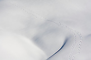 Perfect ski and snowboard tracks weave together down a bare snow slope in Garibaldi Provincial Park, British Columbia, Canada.