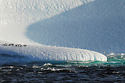 Cape Petrels fly by and chinstrap penguin rest on a dramatic iceberg. Waves crashing against the iceberg sculpting and carving out the ice.