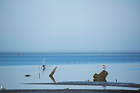 Kilchis Point, Tillamook Bay, Oregon.