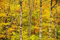 Autumn foliage along the Bingo Creek, Green Mtn National Forest, Vermont