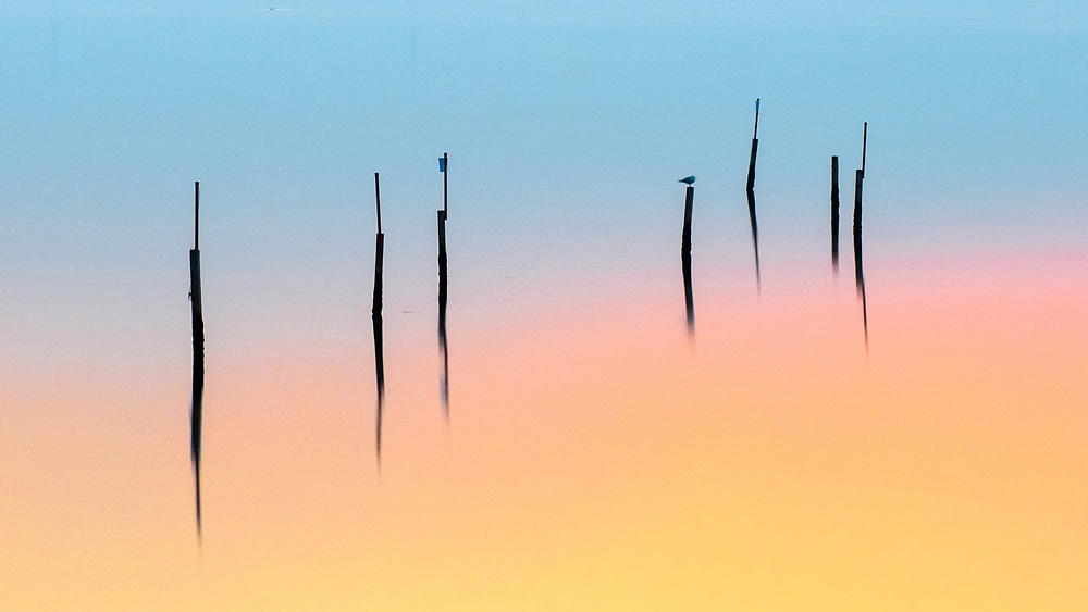 Photography: Color, Digital on Aluminium, Canvas, Forex or photographic paper.<br /> <br /> Birds at sunset resting on wooden sticks in the Venetian Lagoon!<br /> <br /> PRICE: 150,00 €<br /> Shipping included<br /> 7 day money-back guarantee<br /> <br /> <br /> <br /> Styles:<br /> <br /> Fine Art<br /> Minimalism