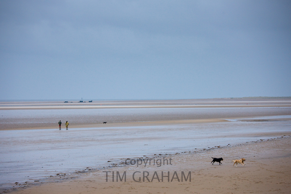 Walkers stroll along the shoreline walking their dogs in winter at Holkham beach, North Norfolk, UK