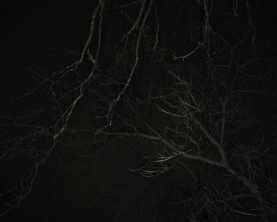 Tree Branch at night