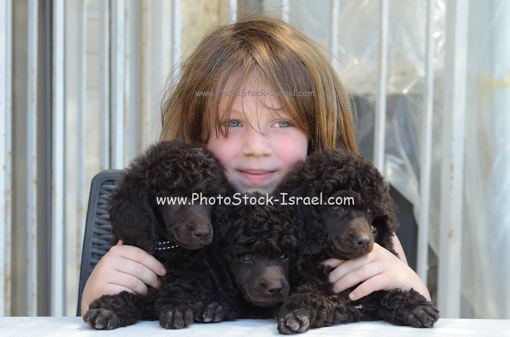 Young girl of six with three black poodle puppies