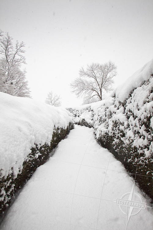 Secluded path through hig snow covered hedges.