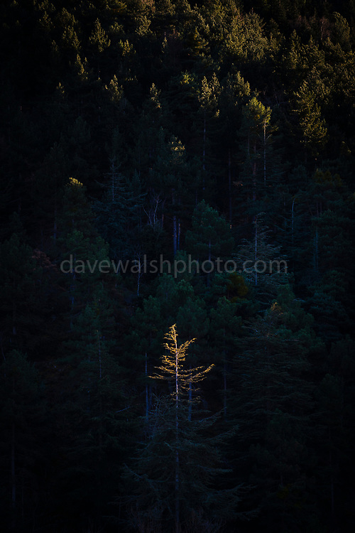 Late afternoon sunlight touches a treetop in the Massif de Canigou, Pyrenees Orientales, France