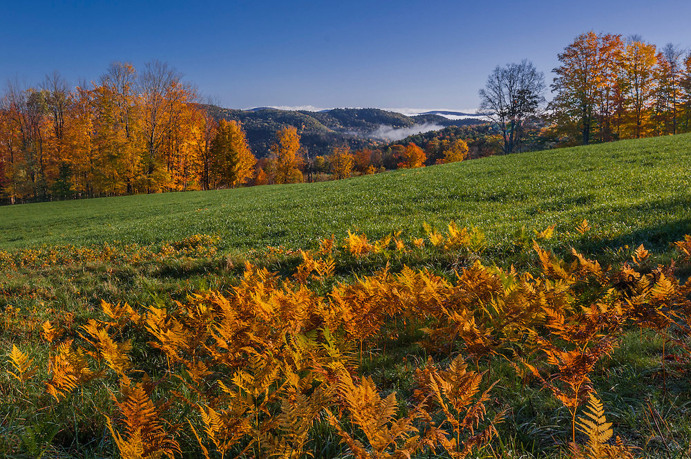 Fall colors in ferns & treeline, with green field and foggy mountain views, Barnet, VT