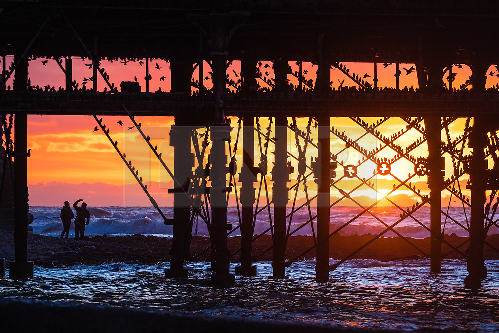 © Licensed to London News Pictures. 13/02/2018. Aberystwyth, UK. The sun setting behind Aberystwyth pier picks out the silhouettes of some of the tens of thousands of tiny starlings as they  roost for the night, huddled together for warmth and safety, on the girders and beams underneath the town's distinctive Victorian era seaside pier. One of only a few urban roosts in the UK, Aberystwyth pier offers birdwatchers an unique opportunity to get 'up close' to these birds, which, although seemingly plentiful in Aberystwyth , are on the RSPB's 'red list' of endangered creatures. Photo credit: Keith Morris/LNP
