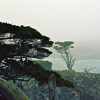 Point Lobos, south of Carmel, CA is a land that has inspired the likes of Adam and Weston. A visit in the early morning before the fog lifts is a photographers delight.<br /> Scanned image .