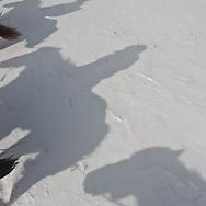 Mongolia. horse riding in winter in the snow in the height lakes area  ovokangai -   /   randonnÈe a cheval en hiver dans la neige vers le col,  sur le chemin des huit lacs,   ovokangai - Mongolie