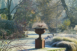 Terracotta urn on a plinth on a frosty winter's morning in John Massey's garden. Carex comans 'Bronze form'. Grasses border, lawn and trees beyond. Design: John Massey, Ashwood Nurseries