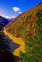 Autumn color near Midano Dam, on the road to Kamikochi, the Japan Alps, Nagano Prefecture, Japan