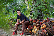 Hasan who goes by only one name sits on a pile of freshly cut palm fruit on his family plot in Beluran District, Sabah, Malaysia, on 10 September 2016. Hasan inherited his farm from his father, and has embraced the new, more sustainable farming methods he has learned from being part of the Wild Asia Group scheme, which works with the Roundtable on Sustainable Palm Oil to support Malaysian smallholders to become certified sustainable. This includes improving farm management, reducing their use of pesticides and fertilizers, and increasing yields. Smallholders account for 40% of global palm oil production, and as such play an important role in increasing sustainability within the industry.