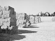 6727. Baled hay stacks on a farm near Bethany, Oregon. August 20, 1946.