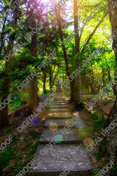 Path of large numbers of steps in the middle of a forrest with a sun flare