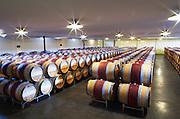 Oak barrel aging and fermentation cellar. Chateau Malartic Lagraviere, Pessac Leognan, Graves, Bordeaux, France