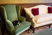 Palmerston, the resident cat of the Foreign and Commonwealth Office FCO sleeps on a winged armchair in the Ambassadors Meeting Room where senior foreign diplomats wait for official meetings, on 17th September 2017, in Whitehall, London, England. Palmerston is the resident Chief Mouser at the FCO who began his role in2016. Previously, he was from Battersea Dogs & Cats Home and is named after the former Foreign Secretary and Prime Minister Lord Palmerston.
