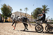 Carriage driving training at the Royal Andalusian School of Equestrian Art (Real Escuela de Equetsre) Andalucia, Jerez, Spain