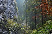 Valea Crapaturii and Rock of the King, National Park Piatra Craiului, Transylvania, Southern Carpathians, Romania
