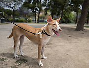 Bowie enjoying a walk in a park near his new home in Los Angeles.