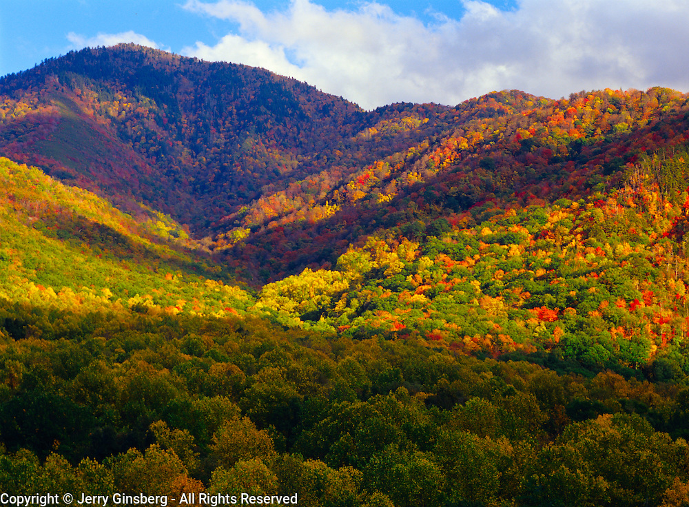 Mountains and trees of Great Smoky Mountains National Park, TN & NC in their brilliant fall colors. Lovely Mt. LeConte rises above Great Smoky Mountains National Park, TN. Brilliant autumn colors highlight this famous and very popular hike. Llamas are aoften used to pack gear in & out.