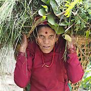 Nepal Solar Farming