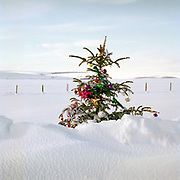 A decorated Christmas tree in the snow on the A169, North York Moors, North Yorkshire, UK