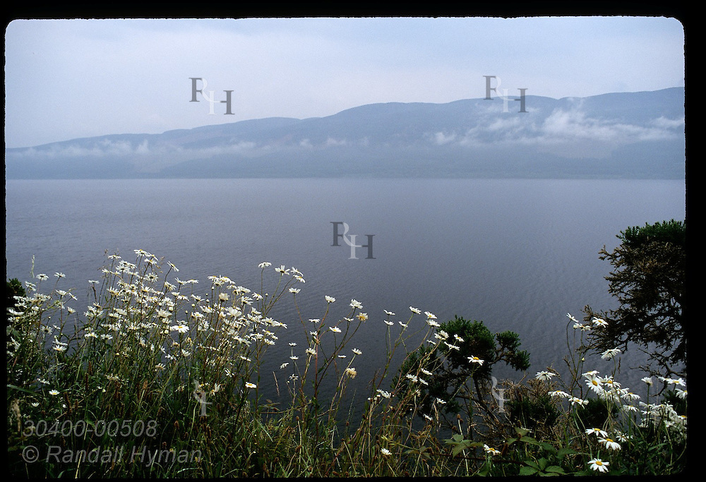 Daisies frame misty waters of Loch Ness, Britain's largest lake, on a July morn; Drumnadrochit. Scotland