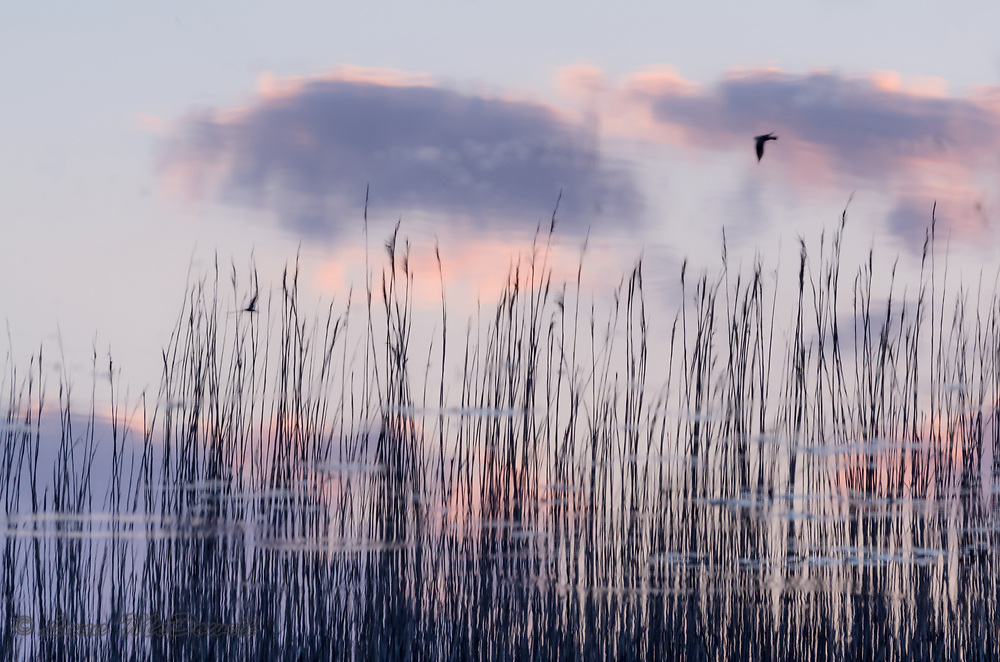 Clouds, grasses and birds are all a sunset reflection.  Love the way the water creates a soft dreamy feel.