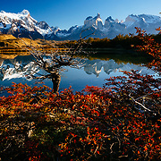 Lenga beech in peak autumn folioage is reflected in a laguna in Torres del Paine National Park, Chile.