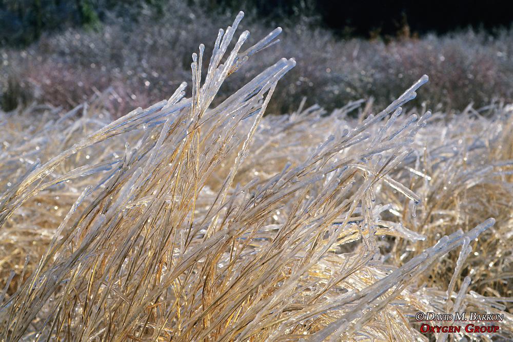 Ice On Hay