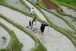May 2, 2019 - Guilin, China - Farmers working in the Longji terraced fields in Longsheng County, south China's Guangxi Zhuang Autonomous Region. The day marks the start of spring ploughing for the locals. (Credit Image: © Xinhua via ZUMA Wire)