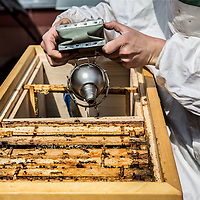 Nederland, Amsterdam, 11 mei 2016.<br /> Imker Jan Willem van den Heuvel met zijn bijen op het dak van de Stadsschouwburg.<br /> <br /> City beekeeper Jan Willem van den Heuvel with his bees on the roof of the theater Stadschouwburg in Amsterdam. <br /> <br /> Foto: Jean-Pierre Jans