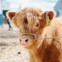 Royal Highland Show 2014 Oleary PR