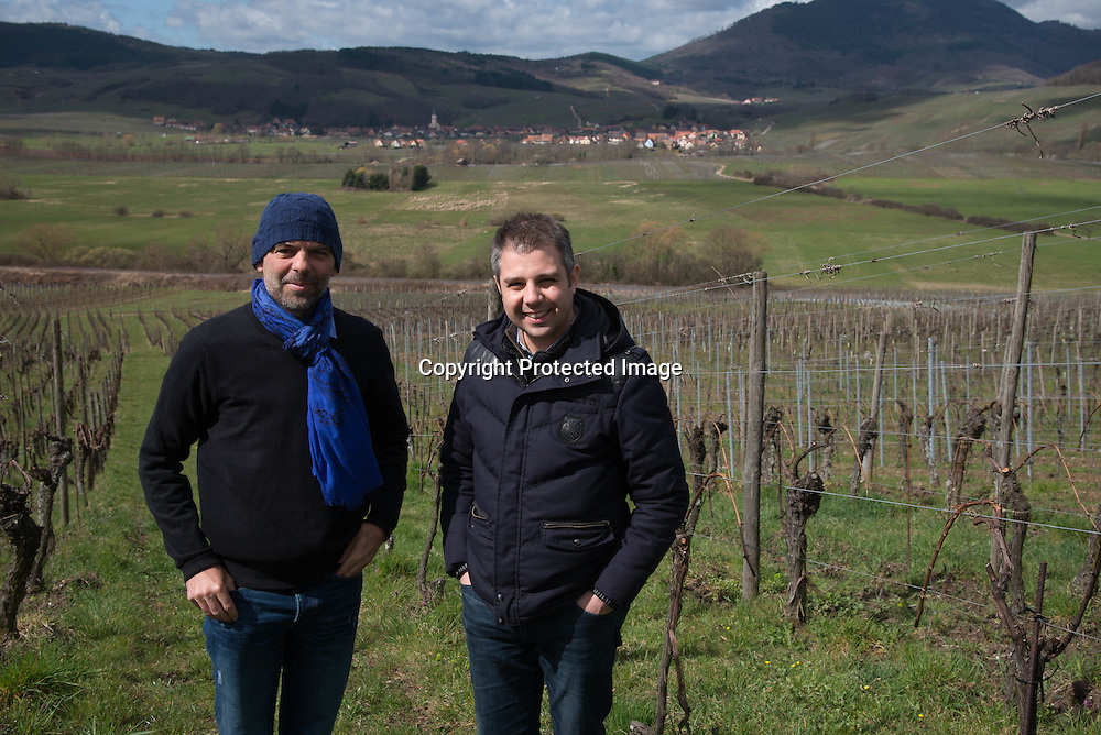 France. Alsace, Andre Ostertag , Hugues Pouget visit the vineyards of the  famous wine maker Andre Ostertag