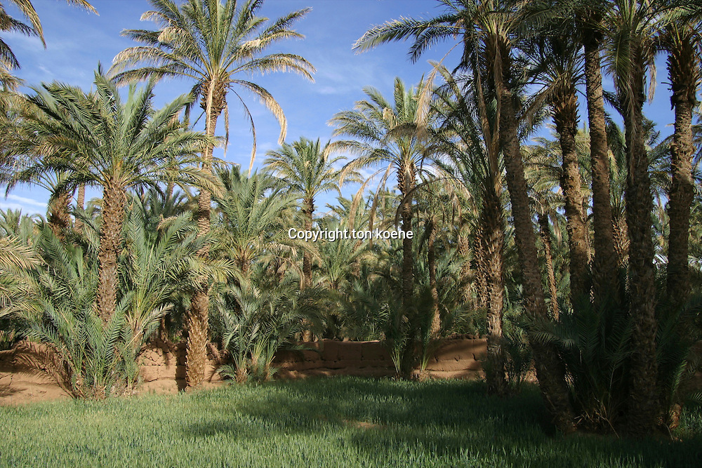 Oase in the dessert in Morocco
