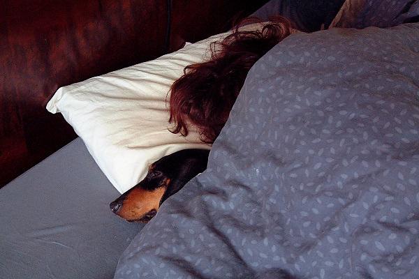 Nederland, Nijmegen, 24-7-2002Hond, tekkel, slaapt bij baasje in bed. Dierenliefde.Foto: Flip Franssen/Hollandse Hoogte
