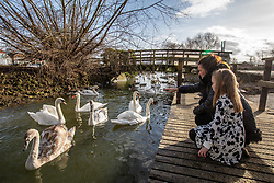 © Licensed to London News Pictures. 15/02/2021. Surrey, UK. After the sub-zero temperatures of last week, families enjoy feeding swans in the sunshine on Truss's Island on the River Thames in Staines, Surrey. The Met Office has forecast much warmer weather this week with highs of 16c and a chance of rain in the South East. Photo credit: Alex Lentati/LNP