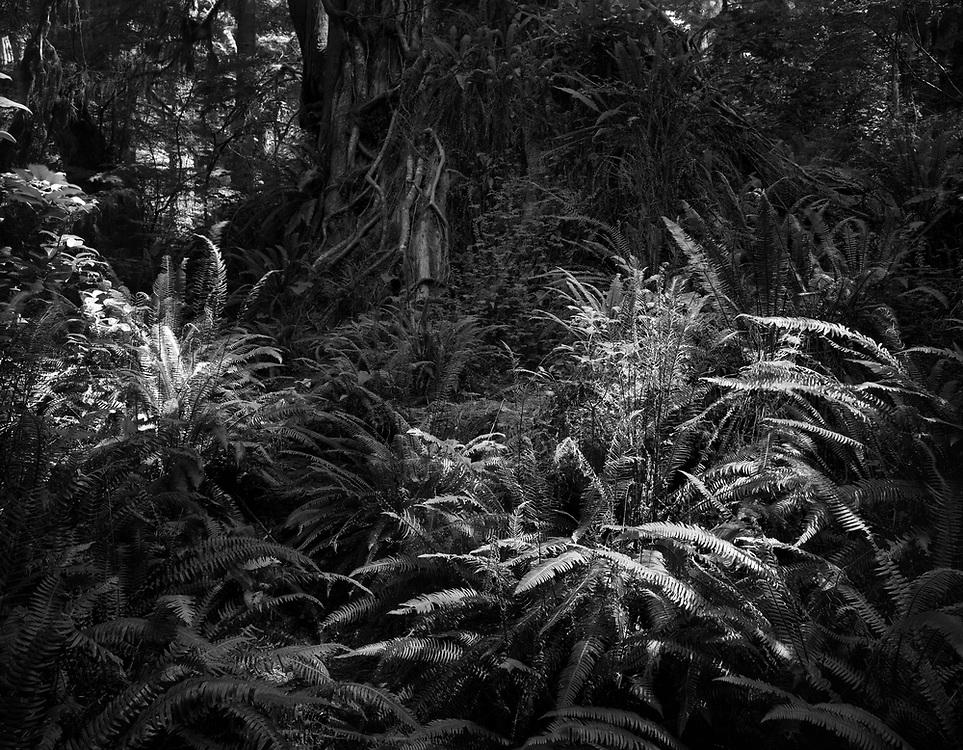 Rainforest Trail, Tofino, BC