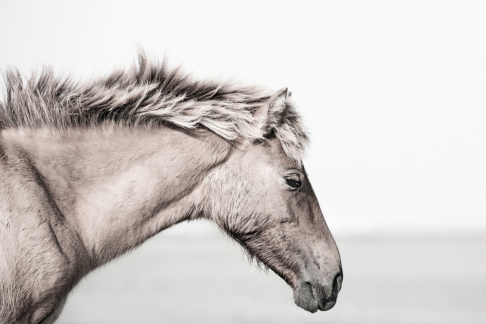 """""""Instead of trying to make your life perfect, give yourself the freedom to make it an adventure, and go ever upward"""" ~ Drew Houston<br /> <br /> Tracie Spence's fine art photography series of The Spanish Wild Mustangs."""