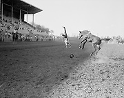 0301-837 Young cowboy thrown from his horse. Phoenix Rodeo, 1950s